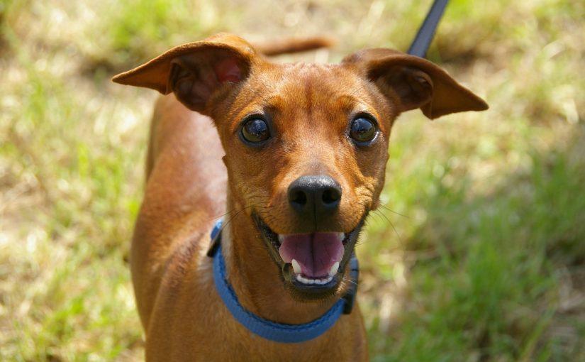hondenverzekering afsluiten en dierenartsen